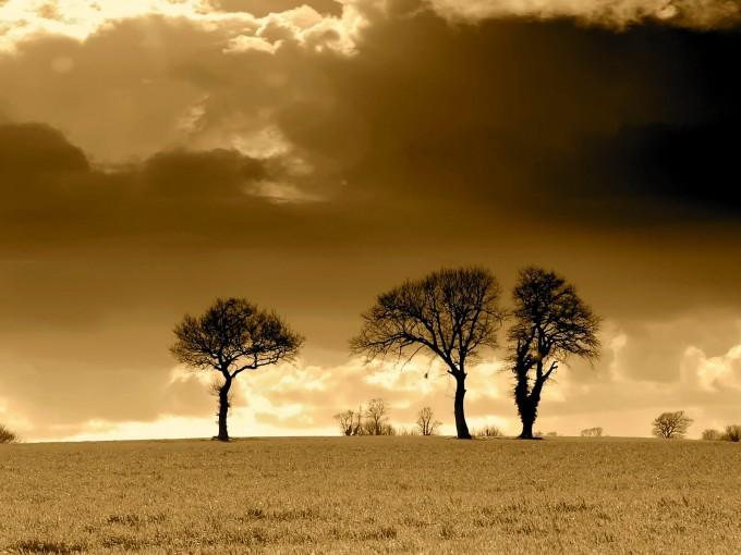 Cei trei copaci